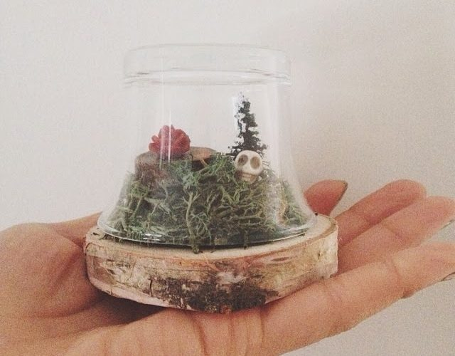 Diy Mini Glass Terrarium Wild Amor