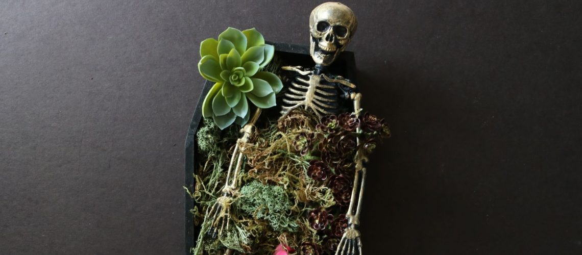 Halloween Diy Coffin Succulent Planter Wild Amor